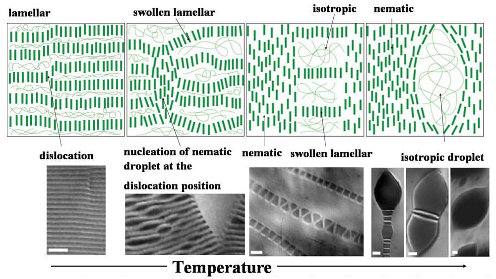Lamellar, nematice and isotropic phases figure