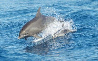 OH Digest: Menopause in dolphins, invasive rats threatening coral reefs, and more