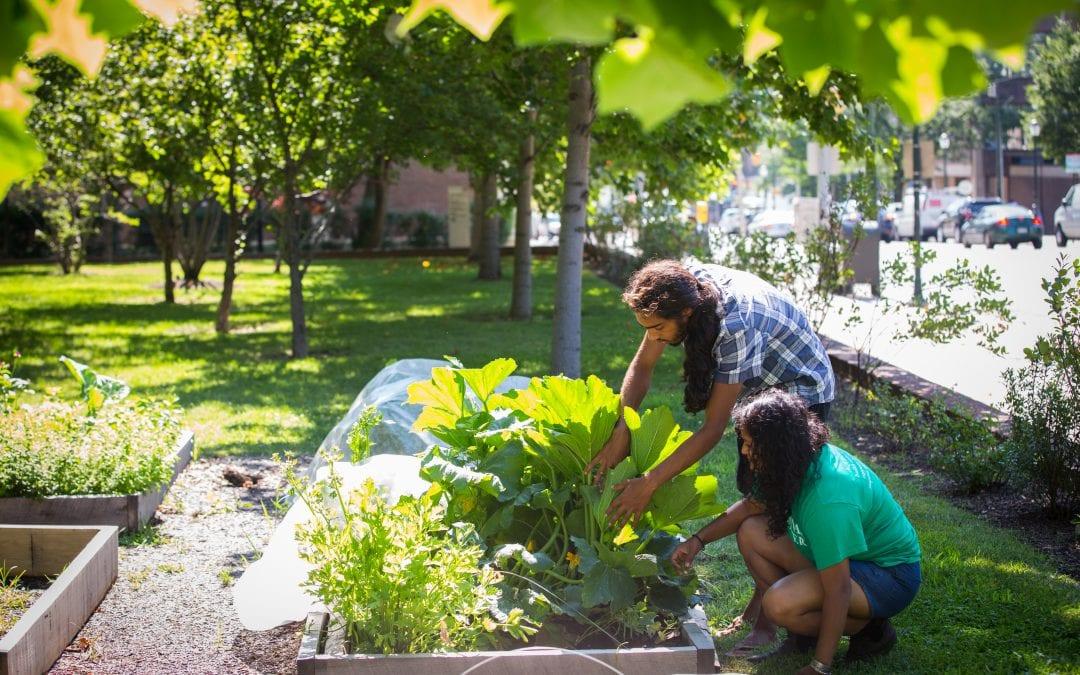 Pro tips from Penn's gardeners