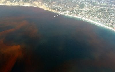 OH Digest: Toxic red tide, 'zombie genes,' and more