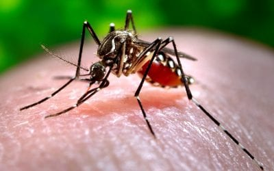 OH Digest: Gene drive mosquitoes, the extinction crisis, and more