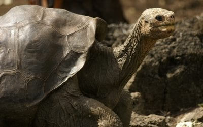 OH Digest: Long-life secrets from a tortoise, the health risks of a changing climate, and more
