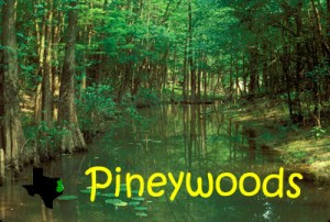 Piney Woods (NATURE)