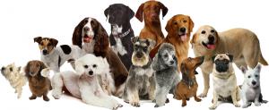 vip-dogs