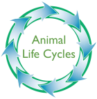 Animal_Life_Cycles