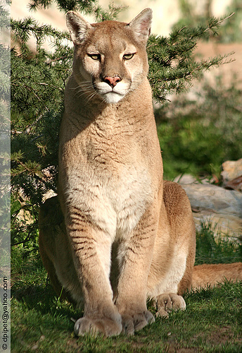 Here Is Some Facts Of Some Endangered Animals Erin S Blog