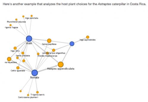 Network analysis visualization