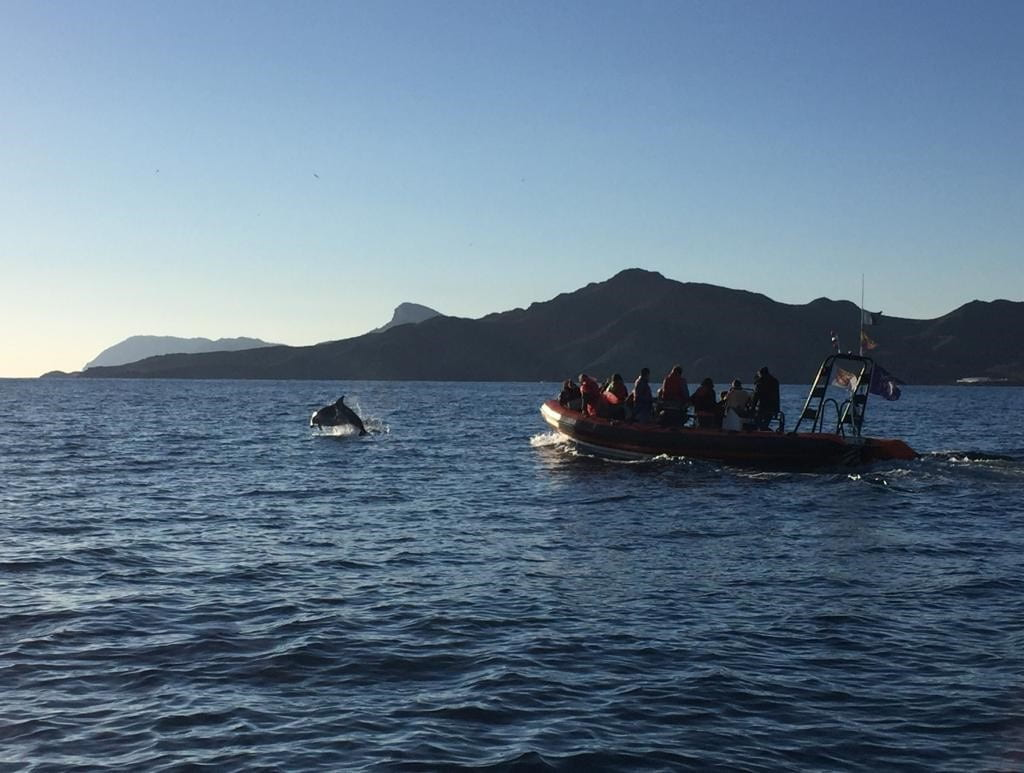 Dolphin jumping out of water near small boat filled with students and small mountain in background