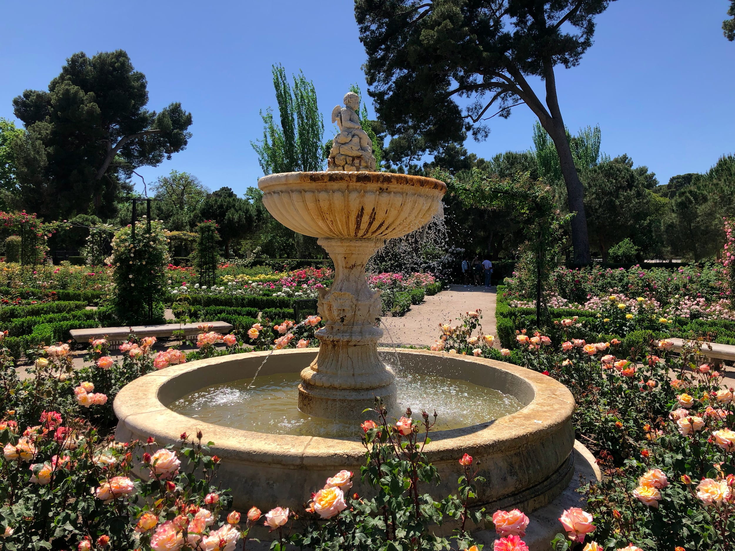 Water fountain made of beige material surrounded by pink roses, green shrubbery and blue sky in background