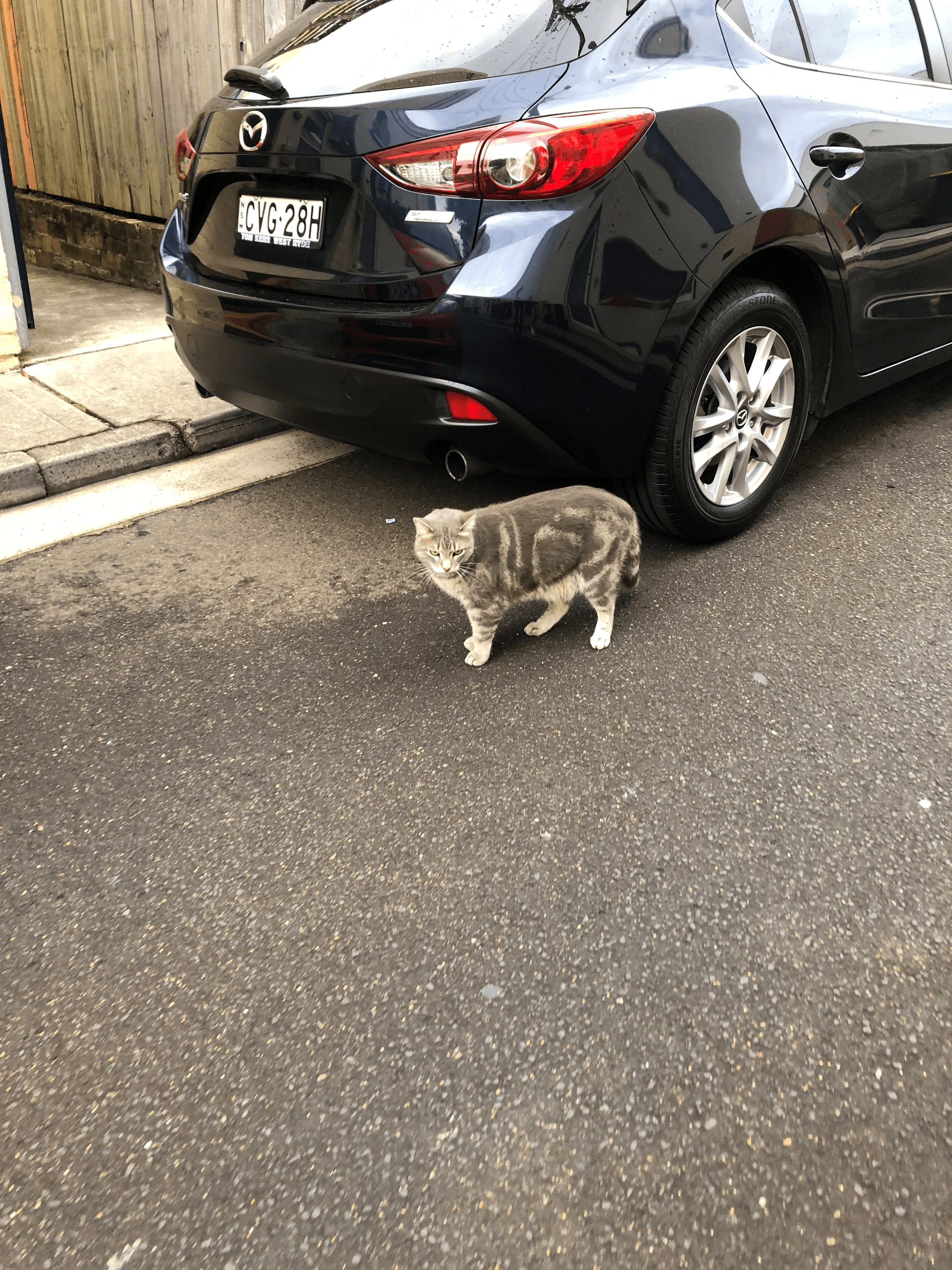 Cat standing next to tire of black car