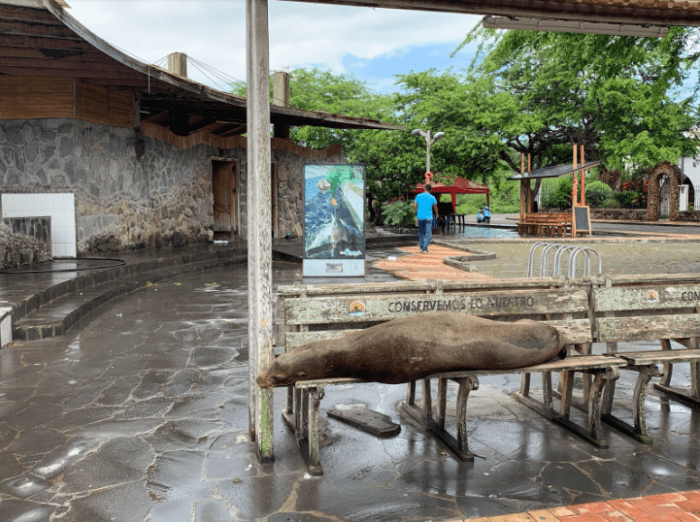 "Every bench provided by the municipal government is inscribed with the words ""conservemos lo nuestro"" (""let's conserve what's ours""). There are hundreds of benches just like this all over San Cristóbal (and they are often used by sea lions)."