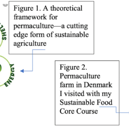 Historical and Experiential Analysis of the Sustainability of Danish Food System