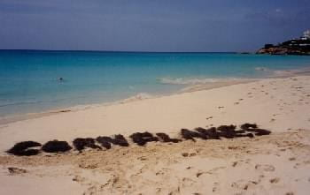 Cornflakes on the Beach of Anguilla