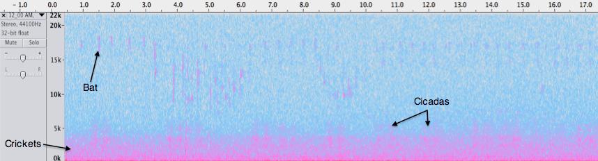 Spectrogram of Blue Trail midnight recording