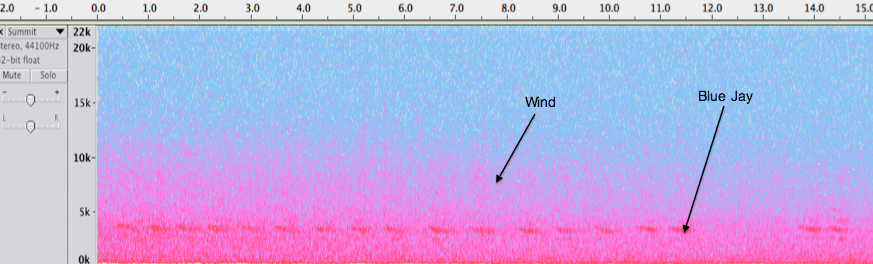 Spectrogram of summit noon recording