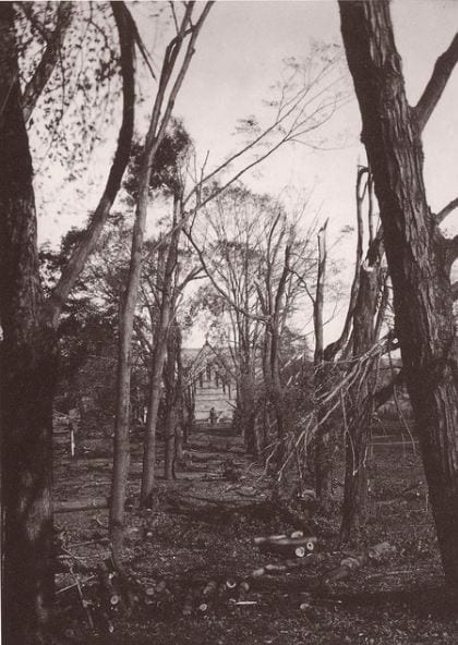 A historical picture of Amherst campus destroyed by a hurricane in 1938