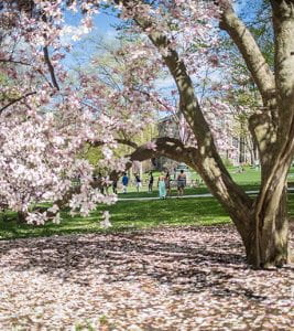Lehigh University in Spring