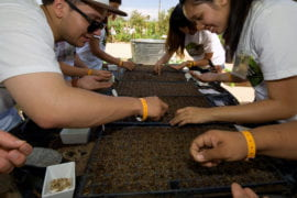 Students plant seed