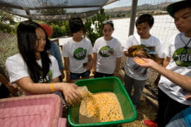 Participants mix chicken feed