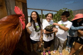 Students meet chickens