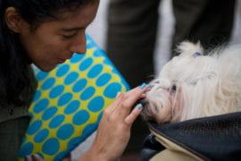 Ashley Jimenez with therapy dog