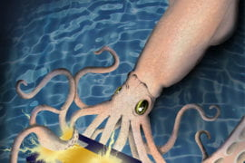 Exploring technology of squid skin