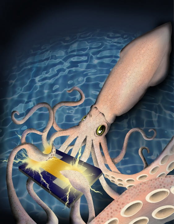 Squid conducting electricity