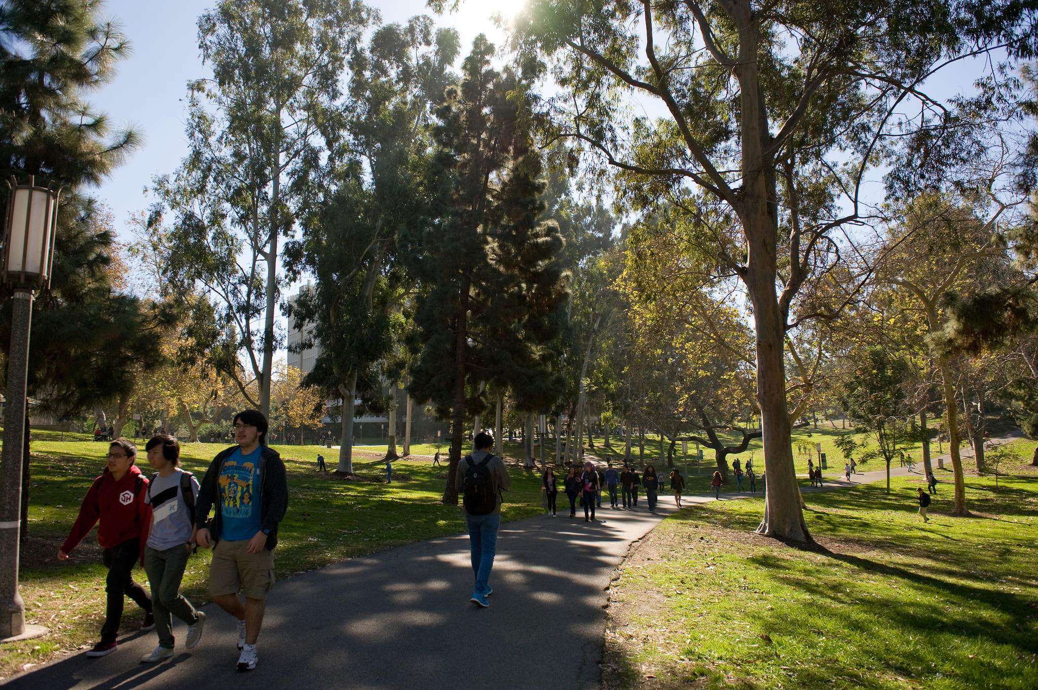 uc irvine admission essay Review the freshman admission profile of uc irvine university of california - admissions accessibility primary took the new sat with essay exam.