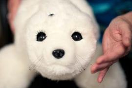 Robotic baby harp seal