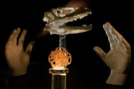3D printed scale Velociraptor skull