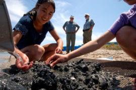 Samantha Wong collects clams