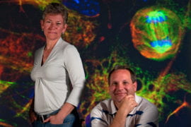 Science, stem cells and serendipity