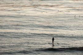 Paddle boarder in the water