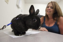 Button, a four-year-old Netherland dwarf rabbit with Paige Chastain