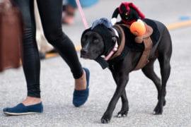 CC the dog at Shocktoberfest