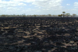 Remnants of a rainforest wildfire