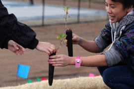 "UCI student Lauren Wong helps her Luiseno ""planting buddy"" extract seedlings from their tubes."