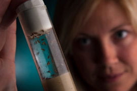 Fly study solves scientific riddle
