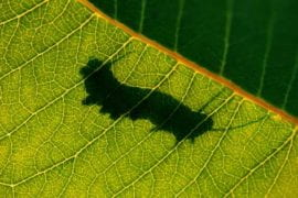 Plants, insects wage garden war