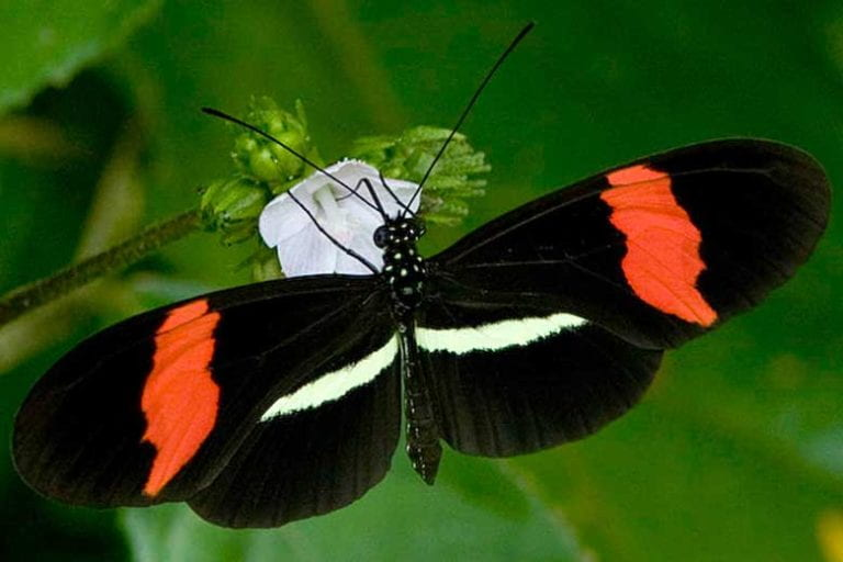 Butterfly vision, wing colors linked