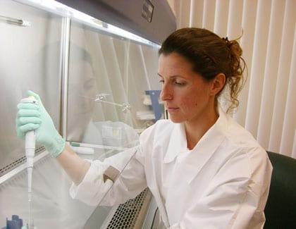 Studying stem cells