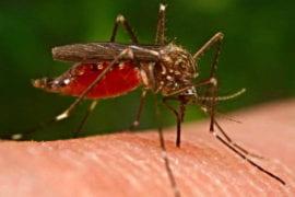 Squashing mosquito-borne disease
