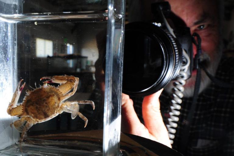 Ocean critters captured on film