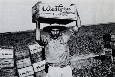 A bracero works the agricultural field