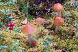 Fungi fight global warming