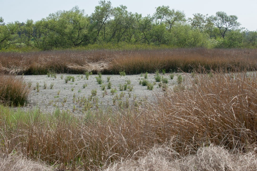 A dried-up pond at the San Joaquin Marsh Reserve near UC Irvine