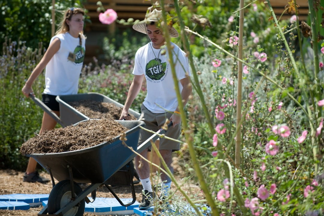 UCI students transport mulch at a community garden as part of the campuss Summer Institute for Sustainability Leadership program.