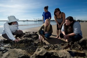 Mackey (center, kneeling) points out marine life to lab members (from left) Priya Ganguli, Johann Lopez, Luyi Ren and Belen Cairo at Corona del Mar State Beach. Steve Zylius / UCI