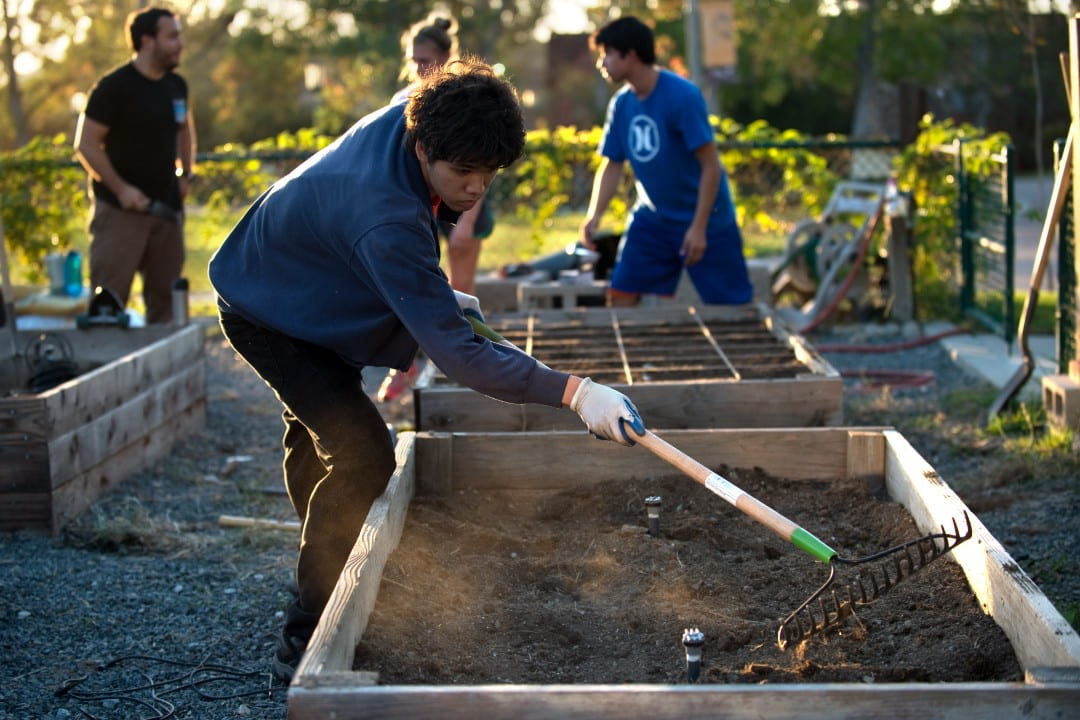 UCI student rakes soil in a community garden on campus. Further integrating student life with educational experiences is a goal of the university's new strategic plan, as is developing a national model for how to live responsibly and well in the 21st century.  Steve Zylius / UCI