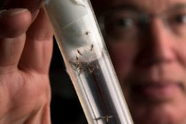 Stopping malaria … one mosquito at a time